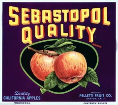 Sebastapol Apple Fruit Crate Label Art Print Peletti Friut Co.Graton CA Decor - $9.89