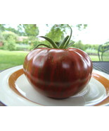 Banded Amazon - early, cold-tolerant, and stunning new tomato from J&L G... - $4.50