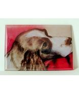 Springer Spaniel Magnet Dog Art Solomon - $6.50