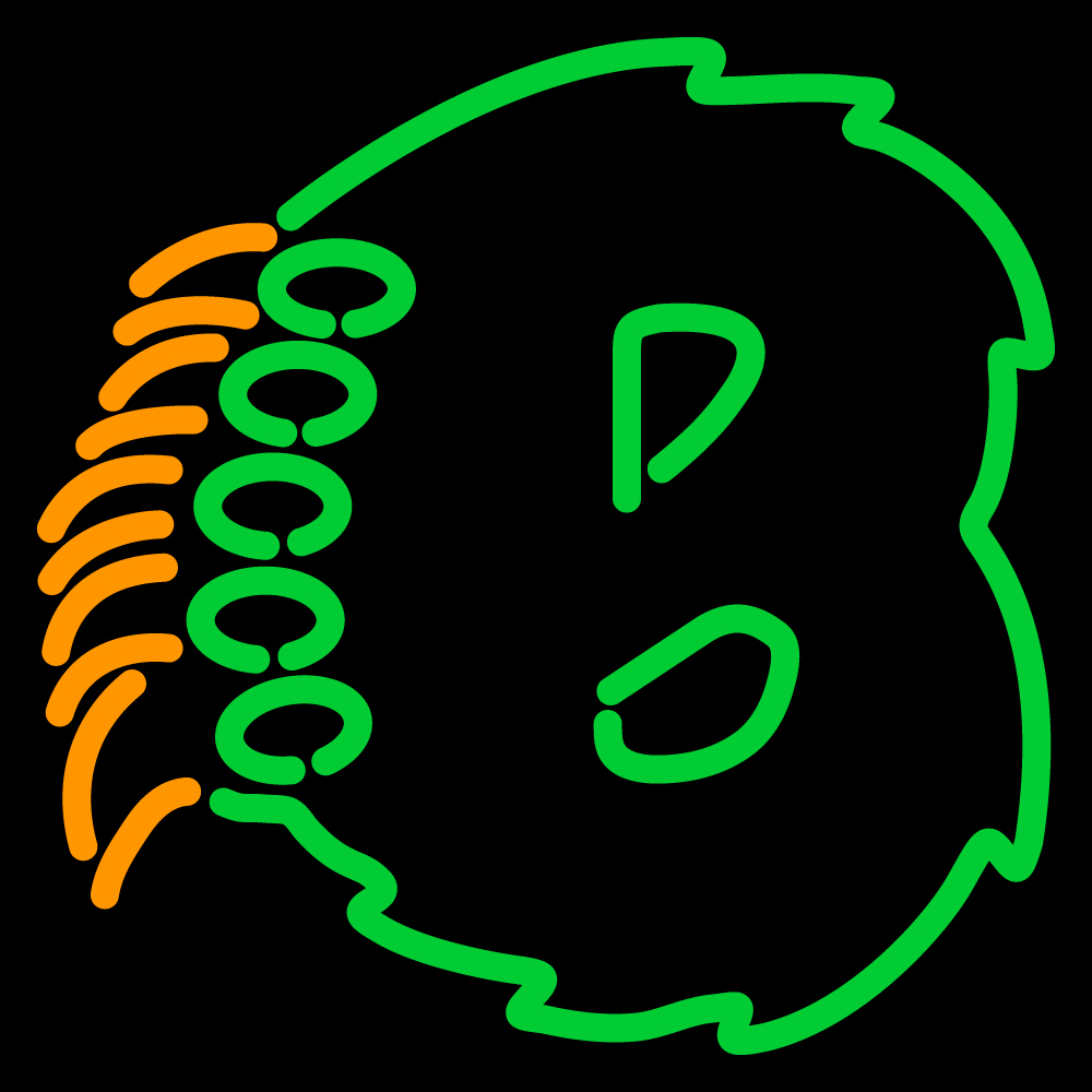 NCAA Baylor Bears Logo Neon Sign - Neon