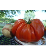 Pum Rim - very rare tomato, huge and deeply fluted - $5.00