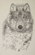 Gray Wolf Art Print Lithograph #93 Signed Kline DRAWING FROM WORDS wolve... - $49.95