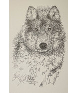Gray Wolf Art Print Lithograph #93 Signed Kline DRAWING FROM WORDS wolves GIFT - $49.95