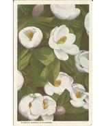 Florida Magnolia Flowers decorate this beautifu... - $4.99