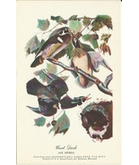 Wood Duck Bird Drawn from Nature by John J. Aud... - $4.99
