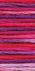 4211 azalea variations
