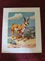 National Wildlife Federation print, 1950, Washington, D.C., Weber, old, ... - $143.93
