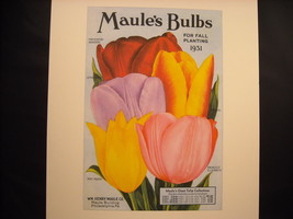 Vintage Color Maule's Bulb Catalogue 1931 Tulips Reprint Poster