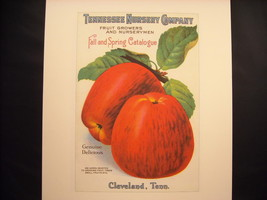 Vintage Reprint Color Tennessee Nursery Company Apple Catalogue Cover Poster