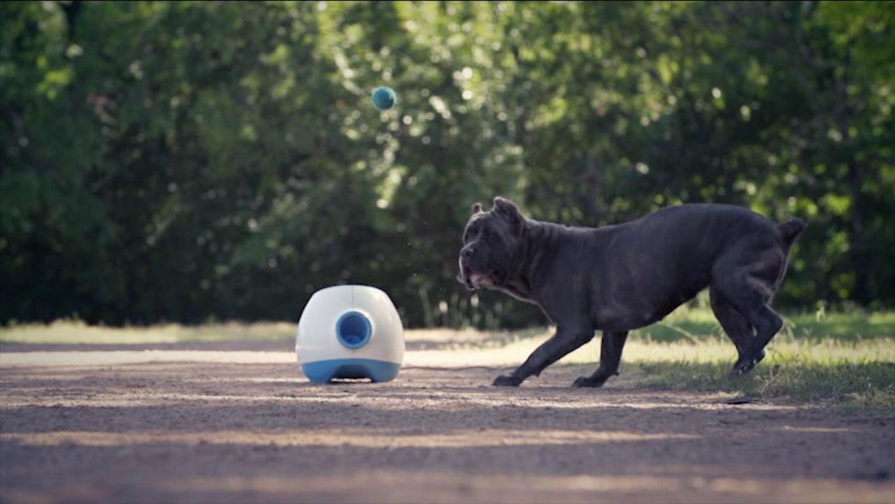 Dog Toy Interactive Ball Thrower For Large Dogs Launches
