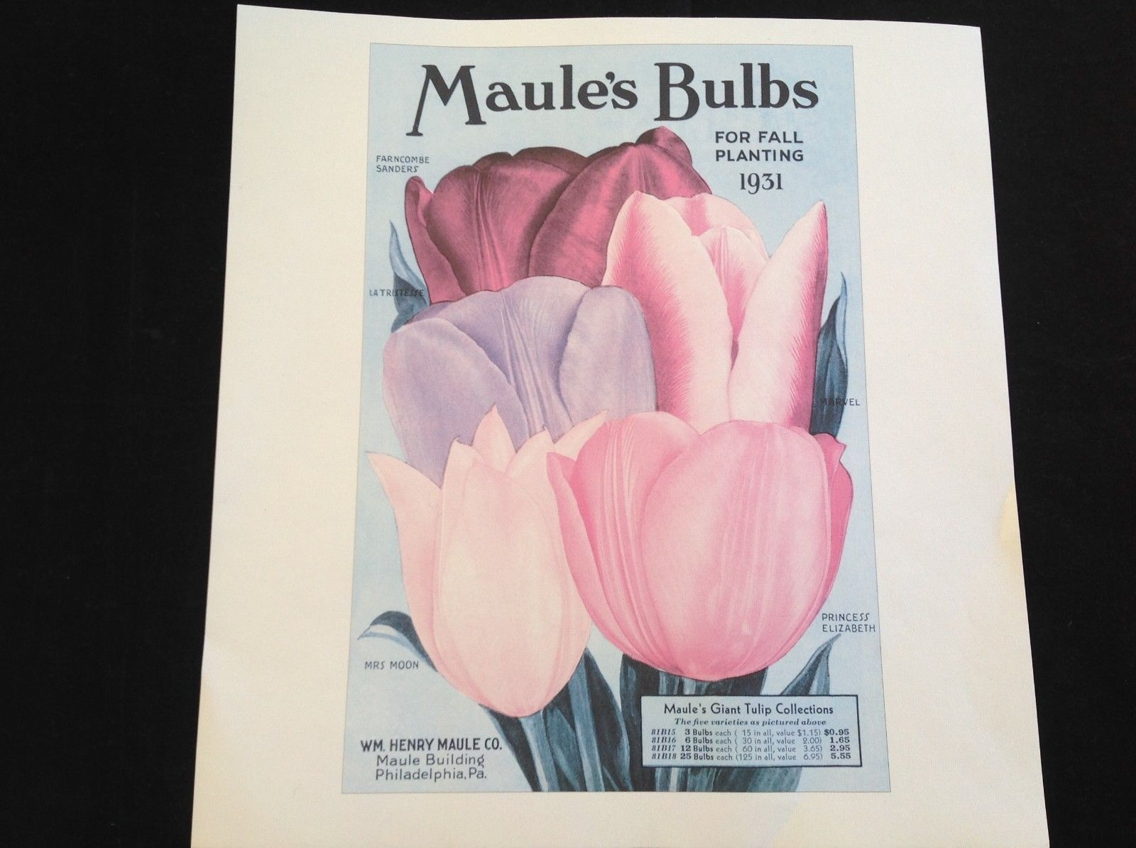 Maule's Bulb Catalog 1931 Tulips Reprint Poster rare misprint without yellow ink