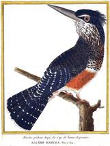 Bird Nature Decorative Poster.Home wall art.Wall Interior Design.2422 - $11.30+