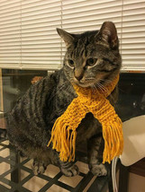 Crochet Cat Collar Scarf With Fringes, Scarf For Cat, Cat Scarf - $10.00