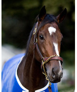 Rachel Alexandra Photo head shot  - $10.00
