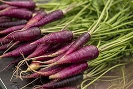 500 Fresh Seeds - Purple Carrot Vegetable - $11.88
