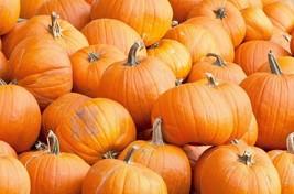 Pumpkin Spookie Non GMO Heirloom Garden Vegetable Seeds Sow No GMO® USA - $4.99