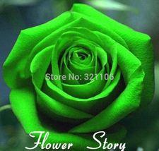100 Green Rose Seeds , Unbelievably fragrant, DIY Potted or Yard Flower Plant - $7.00