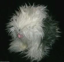 "10"" VINTAGE 1990 COMMONWEALTH SHEEPDOG WHITE PUPPY DOG STUFFED ANIMAL PL... - $18.70"