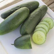 SHIP From US, 25 Seeds Raider F1 Cucumber Seeds, DIY Healthy Vegetable AM - $24.99