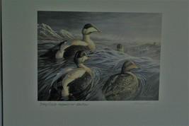 Duck Stamp & Print - Alaska 2000 Medallion Edition Common Eider  - $74.25