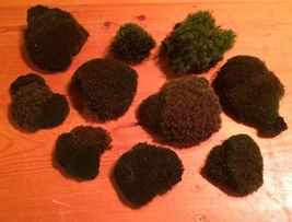 Live Plants - Mixed Moss Dollhouse Terrariums Dish Fairy Garden - Lot 10 - $28.90
