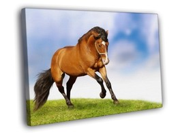 Horse Nature Animal 20x16 Framed Canvas Print - $19.95