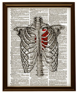 HUMAN RIB CAGE Anatomy Diagram with Red Heart Vintage Dictionary Art Print - $12.00