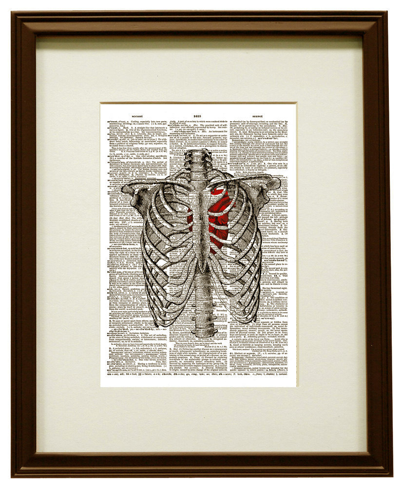 HUMAN RIB CAGE Anatomy Diagram with Red Heart Vintage Dictionary Art Print