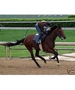 8x10 BIG BROWN -Kentucky Derby Winner working out (43) - $15.00