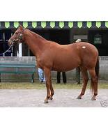 8x10 color photo AZERI Champion race mare -(22) - $15.00