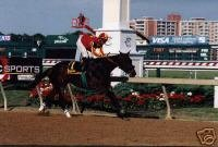 8x10 color photo of Silver Bullet Day