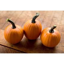 Pumpkin Seeds - Wee-B-Little - Gardening -  Outdoor Living - FREE SHIPPING - $44.99+