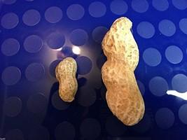 5 Worlds Largest Peanuts-1264 - $3.98