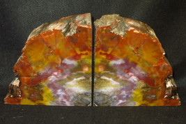 LARGE Exquisite Awesome AZ Rainbow Petrified Wood Bookends 19 lbs! - $399.00