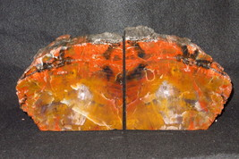 Exquisite Awesome AZ Rainbow Petrified Wood Bookends Over 11 lbs! - $379.00