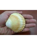 YELLOW CUP Sea Shell Pill TRINKET Box Coin Purse #7321 - $6.00