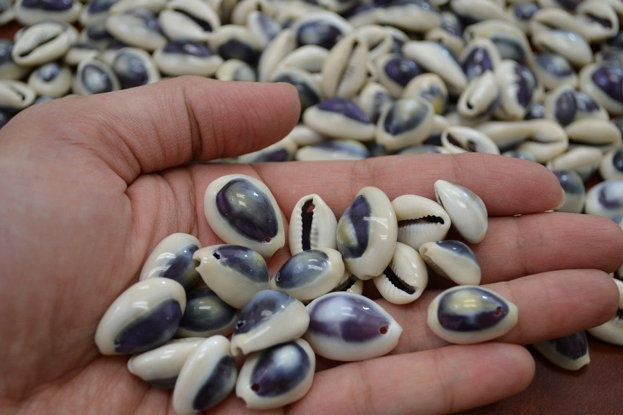 100 Pieces Drilled Hole Purple Ring Top Shell Bead Cowrie Craft 7373A - $8.00