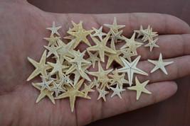 "90 Pcs Small Starfish Star Sea Shell Beach Craft 1/2""   3/4"" #7459 - $7.00"