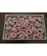 100 Pieces Dyed Raspberry URCHINS Sea Shell Beach Wedding #7396R - $40.00