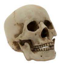 7 Inch Homosapiens Skeleton Skull Replica Resin Statue Figurine - $17.82