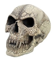 8 Inch Cracked Vampire Skeleton Skull with Fangs Statue Figurine - $24.05