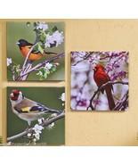 """20""""x 20"""" Bird Stretched Canvas Prints Cardinals Indoor/Outdoor Set 3 Wil... - $98.99"""