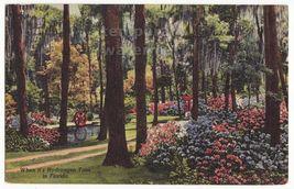Jacksonville FL Oriental Gardens View - Hydrangea Time - Flowers 1950s p... - $3.45