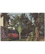 RAVENALA TRAVELERS PALM TREE ~FLORIDA FLORA~TROPICAL PLANTS ~1950s old p... - $3.22