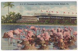 FLAMINGOS NESTS-EGGS- HIALEAH RACE COURSE FL~c1940s vintage postcard~BIR... - $4.37