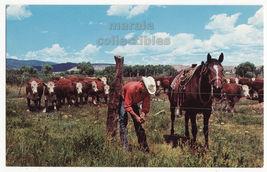 Cowboy Repairing Fence -Whiteface Cattle Graze -Western c1960s postcard (L7288) - $3.63