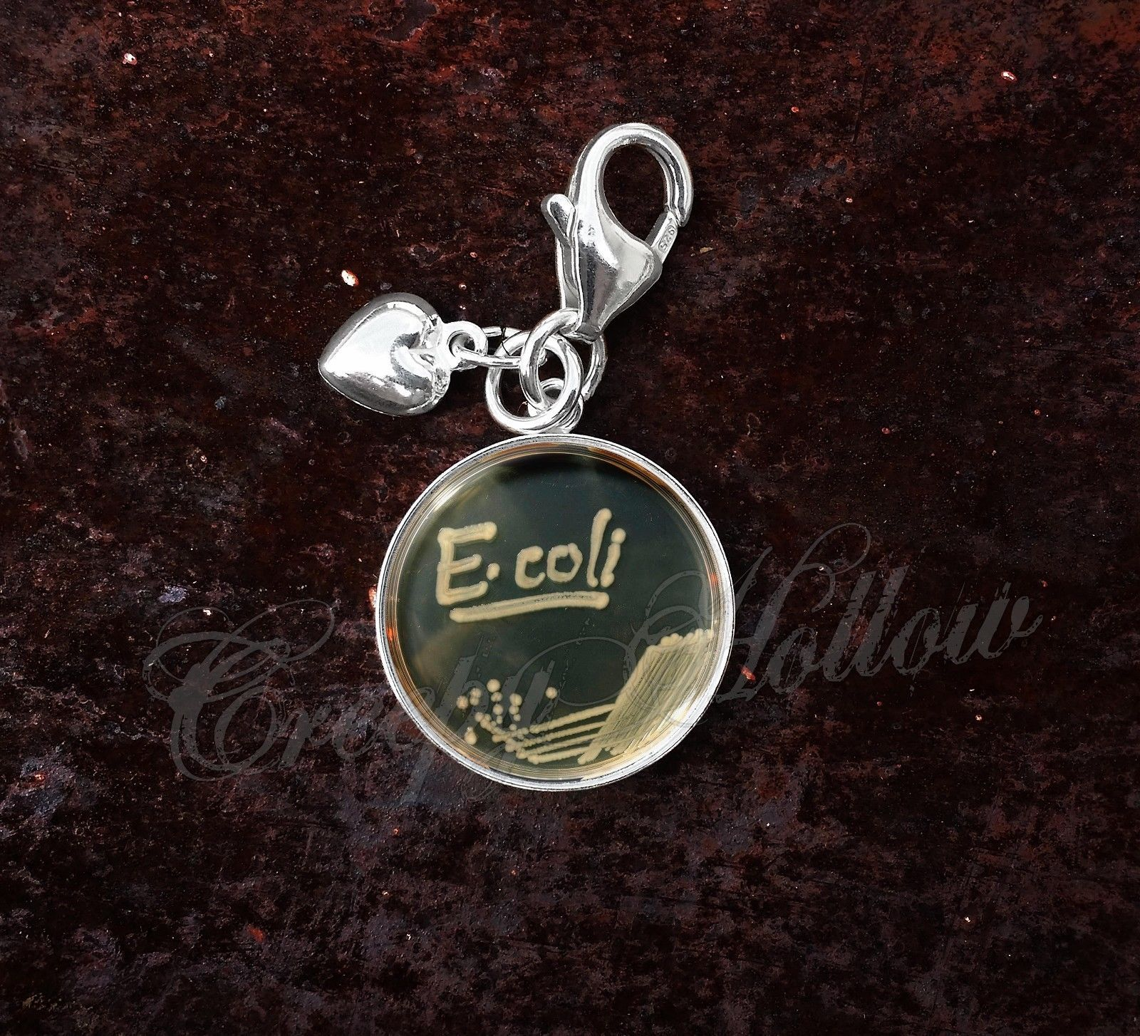 Primary image for 925 Sterling Silver Charm E. Coli Bacteria In Petri Dish Biology