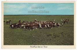 Hereford Cattle Round Up Time -Texas Ranch Scene -Cowboys-c1960s postcard M8354 - $3.22
