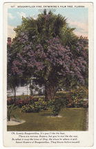 Bouganvillea Vine Entwining a Palm Tree c1920s Florida postcard - $2.71