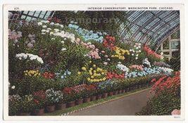 CHICAGO IL-  FLOWERS AT WASHINGTON PARK CONSERVATORY INTERIOR c1925 post... - $3.22